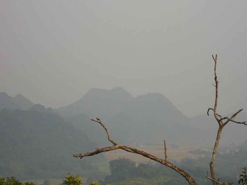 Cúc Phương,Rừng Cúc Phương,Vườn quốc gia Cúc Phương