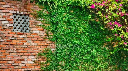 Thằn lằn bò tạo sự lãng mạn cho ngôi nhà của bạn