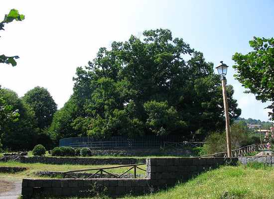 Cây hạt dẻ của một trăm kị sĩ (Italy),cây nhiều tuổi nhất thế giới