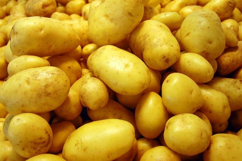 Khoai tây,củ khoai tây,hoa khoai tây,tác dụng của khoai tây,độc tính của khoai tây,trồng cây khoai tây,solanum tuberosum,potato,họ cà,solanaceae,cây lương thực,cây thực phẩm
