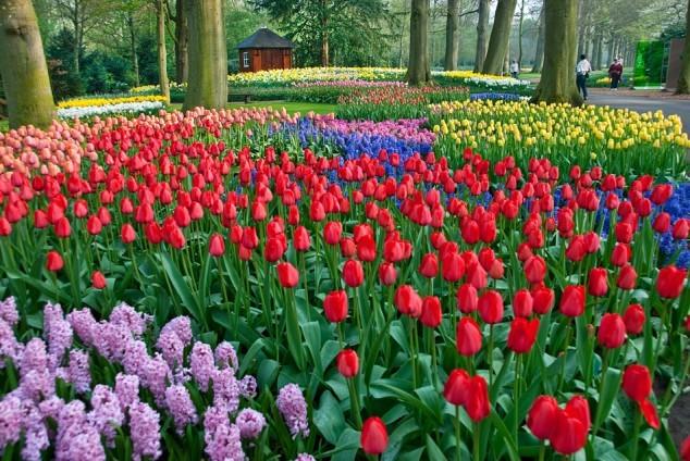 Vườn Keukennhof, Hà Lan,những công viên đẹp nhất thế giới
