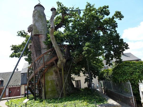 Cây sồi nhà thờ ở nước Pháp