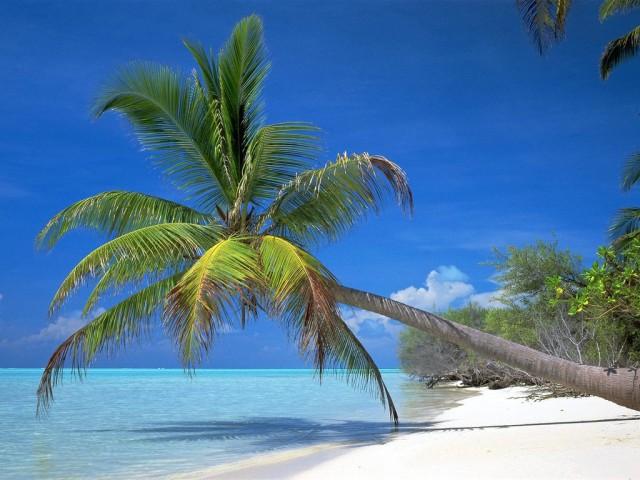 Cây dừa ven bãi biển