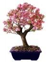 bonsai,cây cảnh bonsai đẹp,cây cảnh đẹp,những tác phẩm bonsai đẹp,Giới thiệu những tác phẩm cây cảnh bonsai đẹp ( Phần 1 )