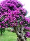 cây cảnh,thế cây cảnh,cay canh,hoa cảnh,Giới thiệu về cây cảnh