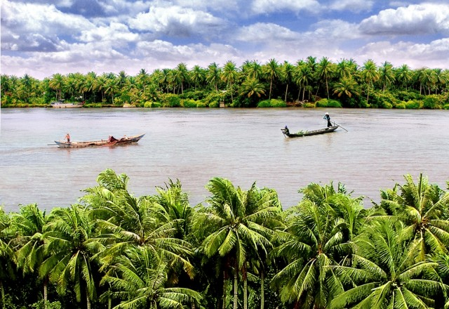 Cây dừa ở tỉnh Bến Tre