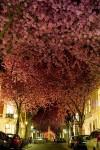con đường tình yêu,những con đường đẹp nhất thế giới,con đường tình yêu lãng mạn,thiên nhiên đẹp,đường hoa anh đào ở Đức,đường hoa Tử Đằng ở Nhật Bản,đường hầm tình yêu ở Ukraina,đường hoa phượng tím ở Nam Phi,đường mòn qua hồ Plitvice ở Croatia,đường cây bạch quả ở Nhật Bản,hàng rào Trung cổ ở Bắc Ireland,đường trúc Sagano ở Nhật Bản,đường Goncalo de Carvalho ở Brazil,Những con đường tình yêu đẹp ngỡ ngàng trên thế giới
