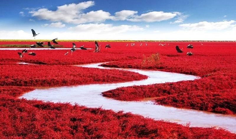 Bãi biển Đỏ ở Trung Quốc