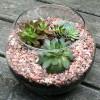 bình cây mini,bình cây nhỏ,bình cây tí hon,bình cây thủy tinh,cách làm bình cây mini,cách làm bình cây thủy tinh,cây cảnh mini,cây cảnh tí hon,terrarium,nghệ thuật terrarium,trồng cây trong lọ thủy tinh,Cách làm bình cây mini đơn giản và đẹp