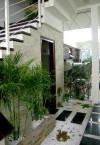 Cây xanh,cây phong thủy,cây trong nhà,cây nội thất,tác dụng của cây xanh,ích lợi của cây xanh,Trồng cây xanh theo phong thủy mang lại sức khỏe cho cả nhà