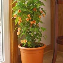 Cây hoa gỗ thích
