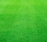 Cỏ nhung,cỏ nhung nhật,cỏ nhật,co nhung,thảm cỏ,Zoysia tenuifolia,Zoysia japonica,kỹ thuật trồng cỏ nhung,Cỏ Nhung