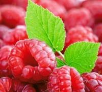 Cây mâm xôi,mâm xôi,quả mâm xôi,đùm đũm,đũm hương,đùm đùm,ngấy,mắc hú,phúc bồn tử,Rubus fruticosus,rubus alceaefolius poir,rubus,cây ăn quả,cây chữa bệnh,Cây mâm xôi