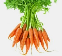 Cà rốt,cây cà rốt,củ cà rốt,hoa cà rốt,carotte,aucus carota,sativus,cây thực phẩm,Cà rốt