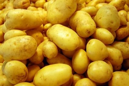 Khoai tây,củ khoai tây,hoa khoai tây,tác dụng của khoai tây,độc tính của khoai tây,trồng cây khoai tây,solanum tuberosum,potato,họ cà,solanaceae,cây lương thực,cây thực phẩm,Khoai tây