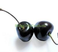 cây anh đào đen, họ hồng, black cherry, cherry đen, hình ảnh cây anh đào đen, công dụng cây anh đào đen, cây anh đào đen chữa bệnh, cách chăm sóc cây anh đào đen,,Cây Anh Đào Đen