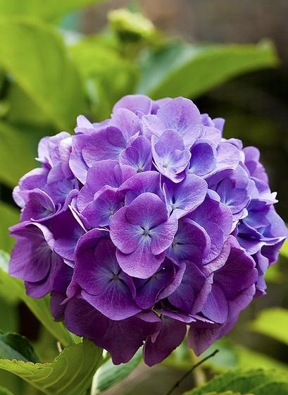 bo-hoa-yeu-em-FlowerBi